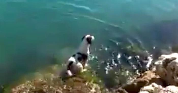 hond kust strand dolfijn zwemmen