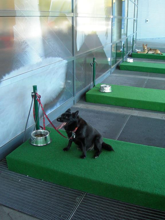 waterbak drinkbak hond
