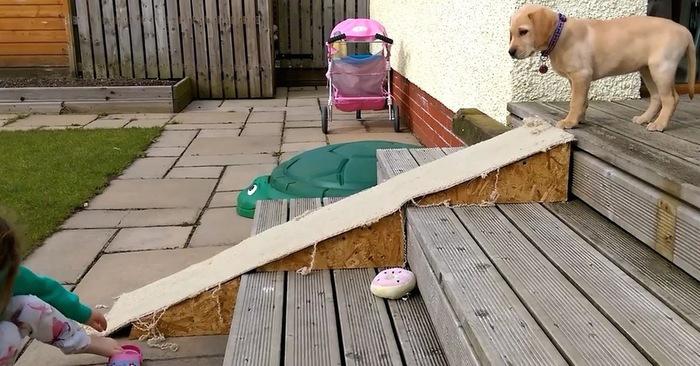labrador puppy hond trap