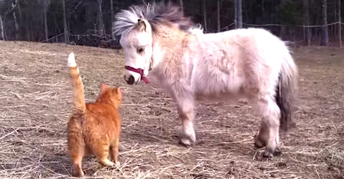 paard kat boerderij