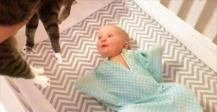 Baby kat familie huisdier