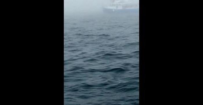Toeristen walvissen spotten Canada