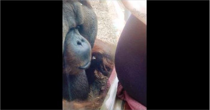 zwangere buik moeder zwanger