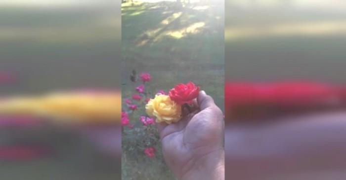 bloemen rozen roos rozen