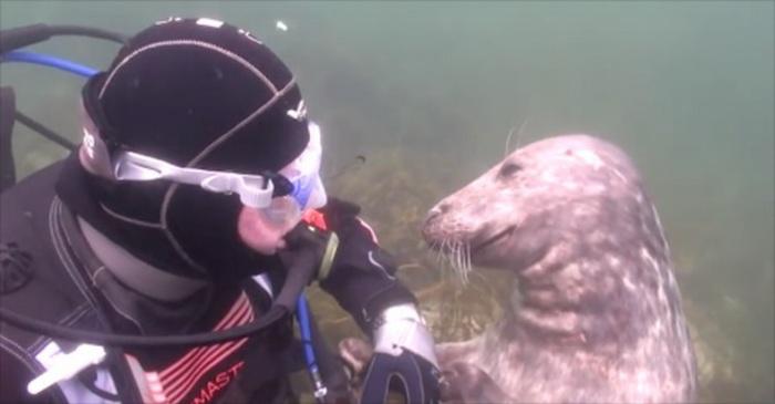 Duiken in zee duikvakantie duikbril scubadiven scuba diven diepzeeduiken scubaduiken