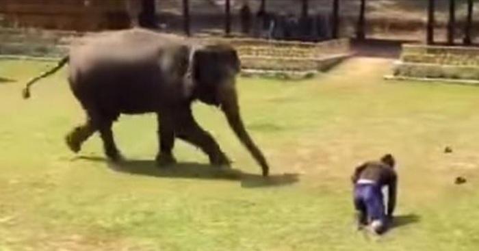 thailand olifanten