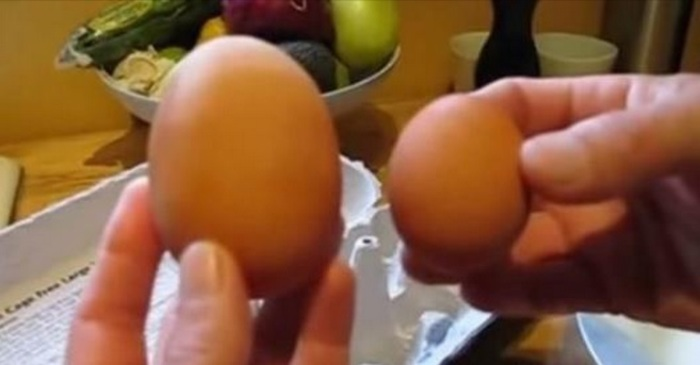 kippen ei eierdoos