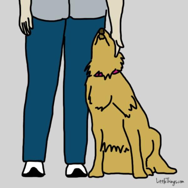 halsband hond tuigje
