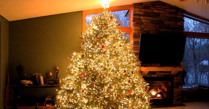 kerstboom kopen kerstbomen kerstverlichting