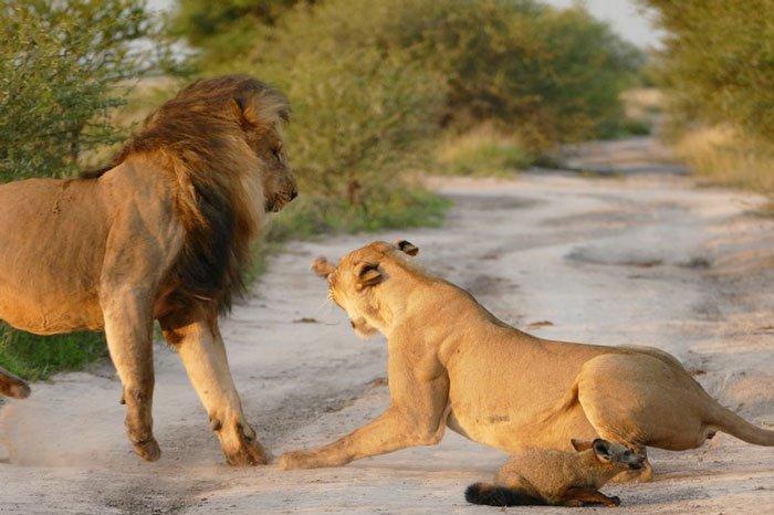 vakantie afrika safari