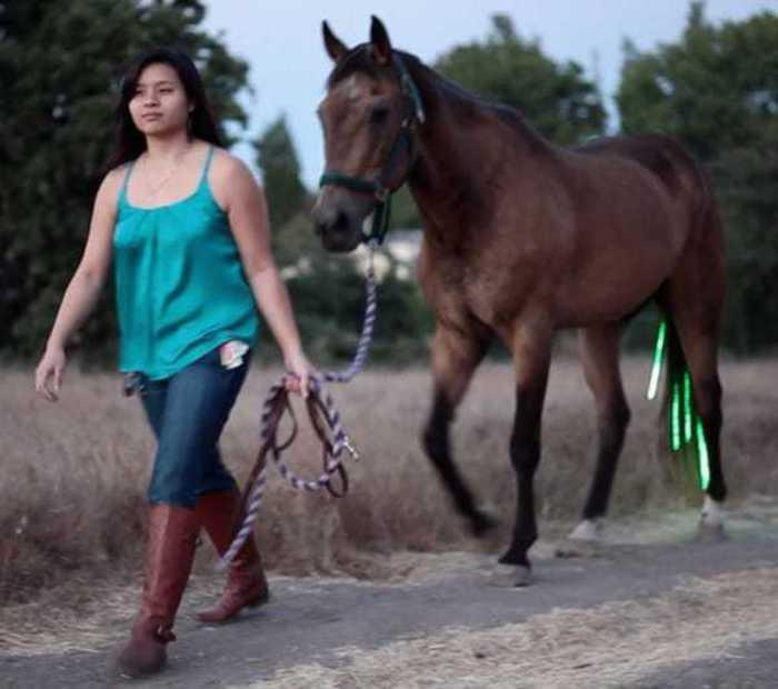 verlichting paard