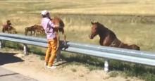 paard veulen