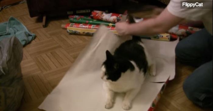 cadeau, inpakken, inpakpapier, cadeaupapier, kerst inpakpapier