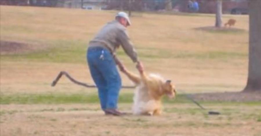 Golden Retriever, retriever, hondenras, rashond