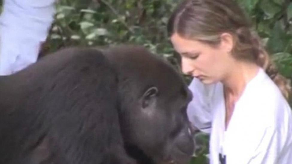 zuid-afrika, reis zuidafrika, zuid afrika reizen, safari afrika, afrika safari