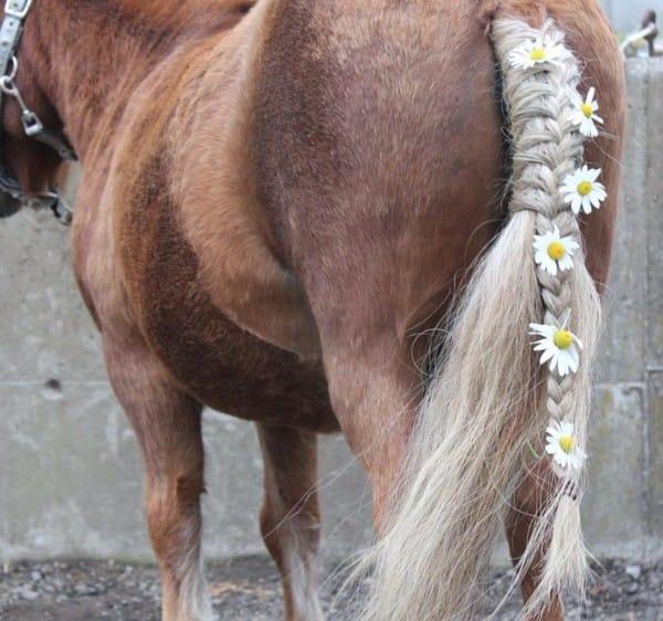 paarden beugels