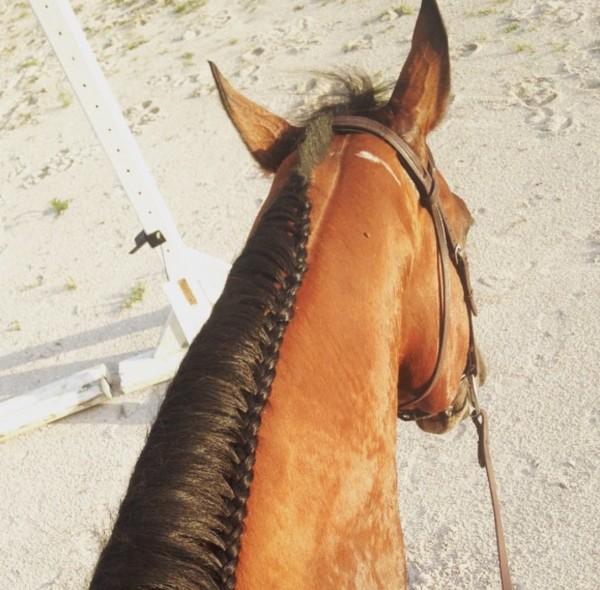 paarden verzorging