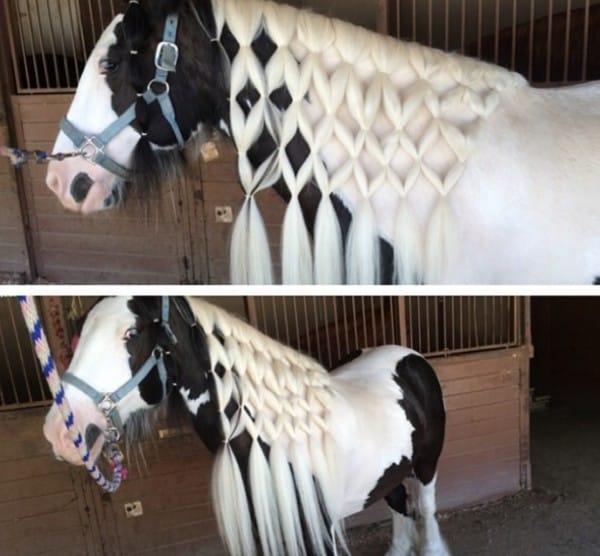 poetsbox paarden
