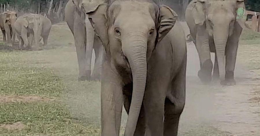 olifant, Thailand reizen