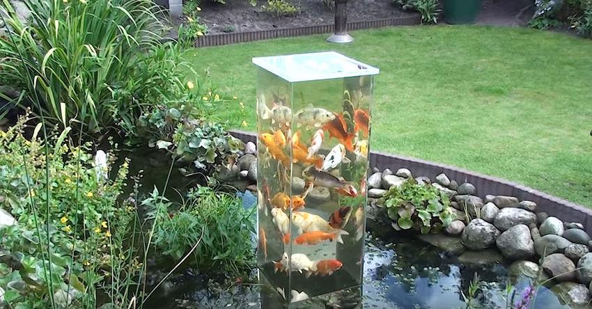 aquarium, tuin, vissen, koikarpers