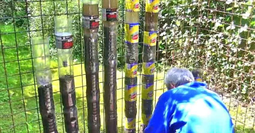 biologische moestuin, fruitbomen, biologisch tuinieren moestuin, moestuin kruiden, zaden