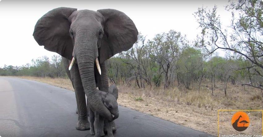 safari, safari in Afrika, Afrika safari, toeristen, Afrika toerisme
