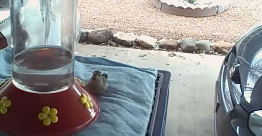 voederhuisje, vogelvoeder, vogelvoer
