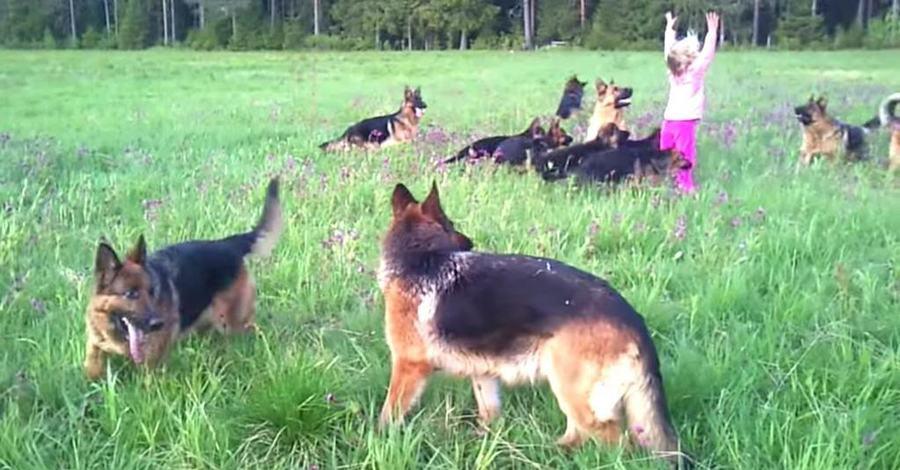 Duitse herdershonden