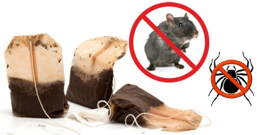 als je 1 theezakje gebruikt, kom je nooit meer muizen of spinnen, Gartenarbeit ideen