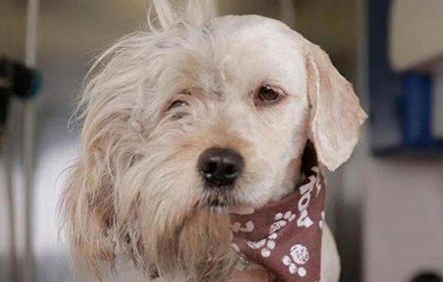 Verwonderlijk Dierenverzorgster Schoor Deze Dakloze Hond, Maar Wat Ze Onder Zijn TR-55